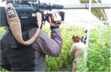FBS福岡 光樹とまと 「トマト狩り体験」