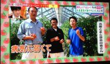 日本テレビ 「ヒルナンデス!」