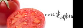 tomato-main